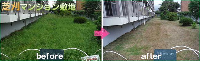 マンション敷地の芝刈